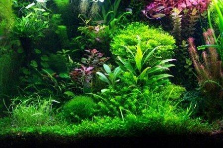 planten in aquarium