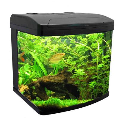 vissen aquarium kopen