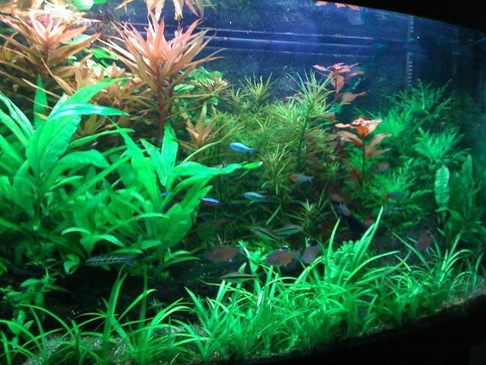 Jouw aquarium   Het aquarium van Mark