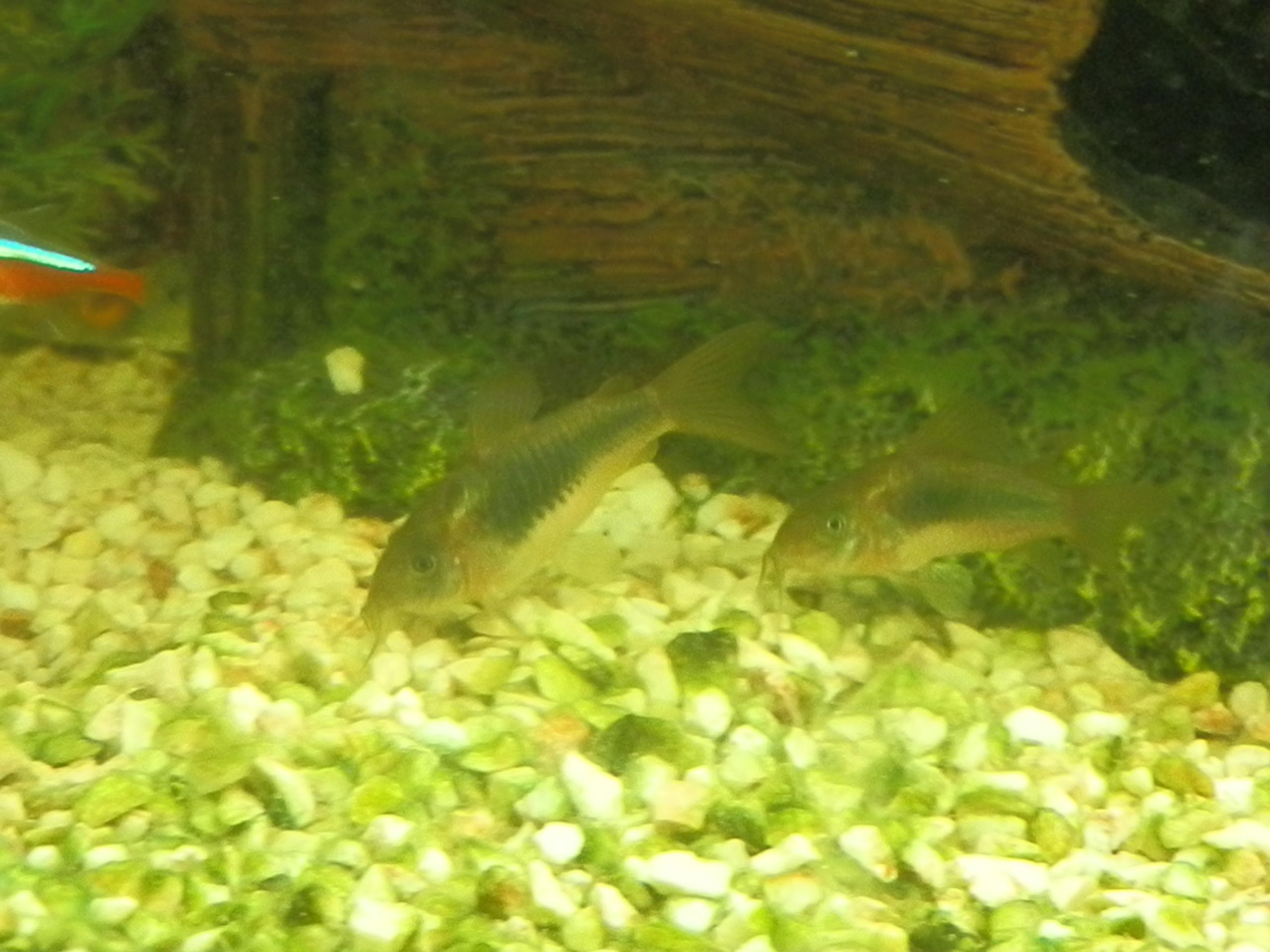 Aquariumvissen Forum